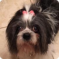 Adopt A Pet :: Trixie - Las Vegas, NV