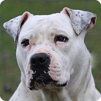 Adopt A Pet :: Freckles - Cedartown, GA