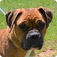 Adopt A Pet :: Rainy - Allentown, NJ
