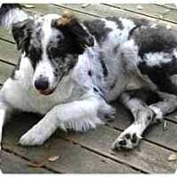 Adopt A Pet :: Charlie - Orlando, FL