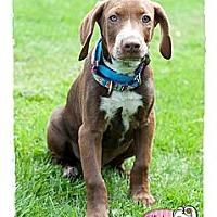 Adopt A Pet :: Togo - Haverhill, MA