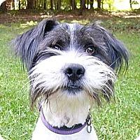 Adopt A Pet :: Charlie - Mocksville, NC