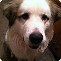 Adopt A Pet :: Wil E._Balt. Cnty - Cumberland, MD