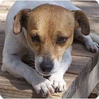 Adopt A Pet :: Samantha in Rockport - Houston, TX