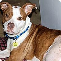 Adopt A Pet :: Rocket - Dallas, GA