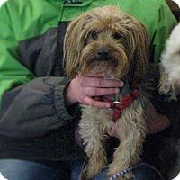 Adopt A Pet :: Baxter - Chewelah, WA