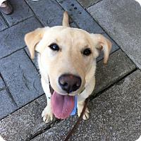 Adopt A Pet :: Kimba - Knoxville, TN
