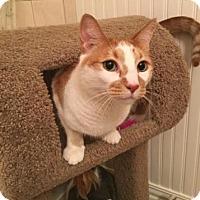 Adopt A Pet :: Leon - Bulverde, TX