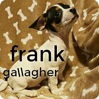 Adopt A Pet :: Frank-Adoption pending - Des Moines, IA