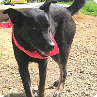 Adopt A Pet :: Willa - Pilot Point, TX
