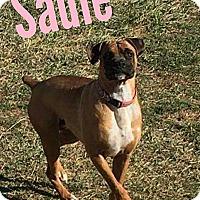 Adopt A Pet :: Sadie - WESTMINSTER, MD