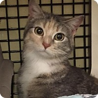 Adopt A Pet :: Champagne - Independence, MO