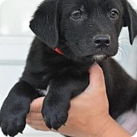 Adopt A Pet :: Winner - Danbury, CT