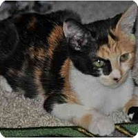 Adopt A Pet :: Tyra - Modesto, CA