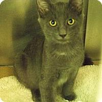 Adopt A Pet :: Hopper - Secaucus, NJ