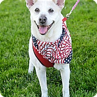 Adopt A Pet :: Avery - Springfield, IL