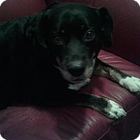 Adopt A Pet :: *Bailey - Winder, GA