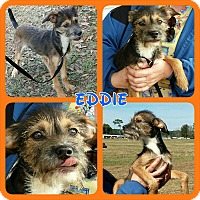 Adopt A Pet :: Eddie - Orange Lake, FL
