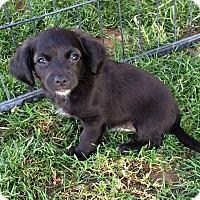 Adopt A Pet :: Fiji - Meridian, ID