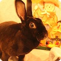 Adopt A Pet :: Lady - Hillside, NJ