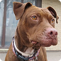 Adopt A Pet :: Gretel- FREE KISSES!! - Wood Dale, IL