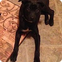 Adopt A Pet :: Finch - Lancaster, PA