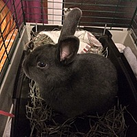 Adopt A Pet :: Kono - Portland, ME