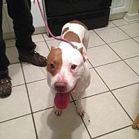 Adopt A Pet :: Stray female in West Point, VA - Richmond, VA