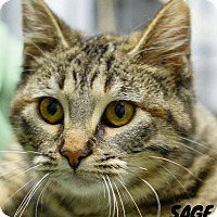 Adopt A Pet :: Sage - Hanna City, IL