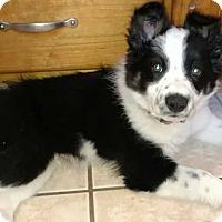 Adopt A Pet :: Ziggy - Salt Lake City, UT