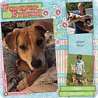 Adopt A Pet :: Kelly - Bryan, TX