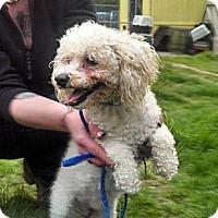 Adopt A Pet :: Armando - Seattle, WA