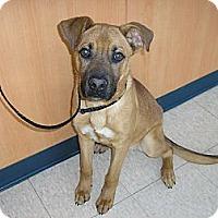 Adopt A Pet :: Willie - Ludington, MI