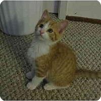 Adopt A Pet :: Frankie - Davis, CA