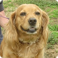 Adopt A Pet :: Sasha - Greenville, RI