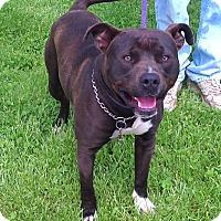 Adopt A Pet :: Max - Metamora, IN