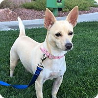 Adopt A Pet :: Ava - Las Vegas, NV