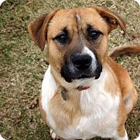 Adopt A Pet :: Meet FRIDAY Big Bouncy Baby Boy! - Rowayton, CT