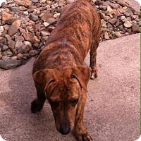 Dachshund Mix Dog for adoption in Lincoln, Nebraska - Woody