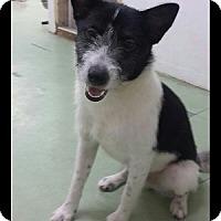 Adopt A Pet :: 'PEAK' - Agoura Hills, CA