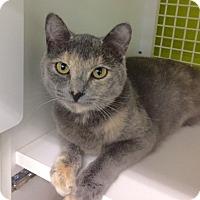 Adopt A Pet :: Nova - Redondo Beach, CA
