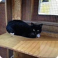 Adopt A Pet :: Chester - Lancaster, MA
