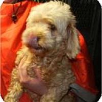 Adopt A Pet :: Cora - Antioch, IL
