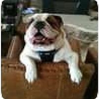 Adopt A Pet :: Romo - Dallas, TX