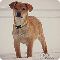 Adopt A Pet :: Doogie - Linton, IN