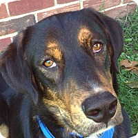 Adopt A Pet :: *Colby - Westport, CT