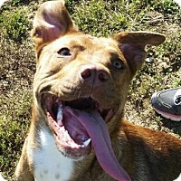 Adopt A Pet :: Shimmer - Huntingburg, IN