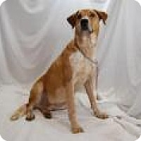 Adopt A Pet :: Luther - Jackson, MS