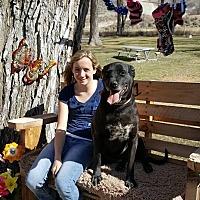 Adopt A Pet :: Jessie - Salina, UT