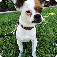Adopt A Pet :: Charles - Mission Viejo, CA
